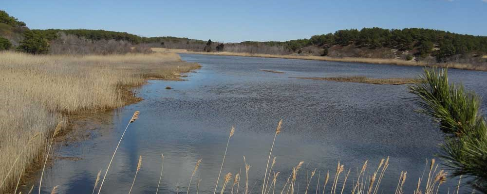 Project Funding for the Friends of Herring River